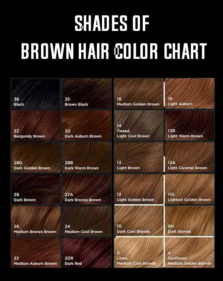 Shades Of Brown Hair Color - hair color chart