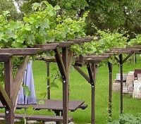 Grapevines on Pergolas Arbours Carports