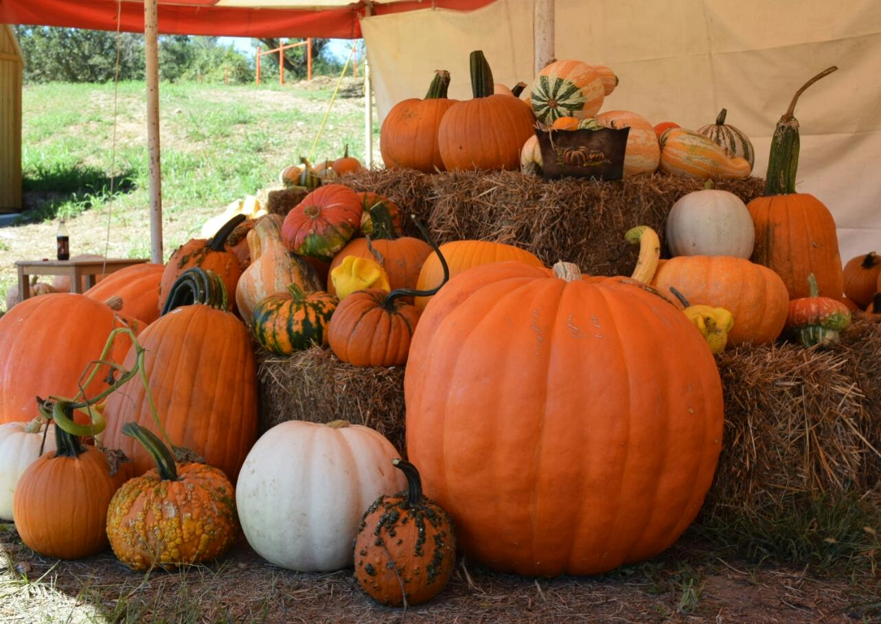 Fall Harvest Wallpaper 10 Pumpkin Patches In And Around Fayetteville