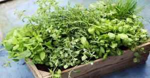 Como fazer uma horta caseira