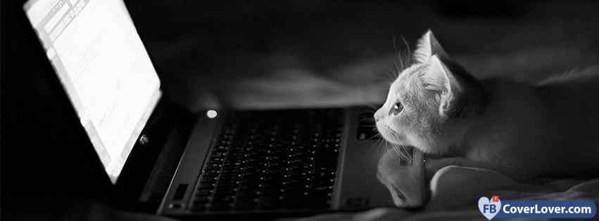 Sad Quotes Wallpapers For Desktop Cat Watching Computer Animals Facebook Cover