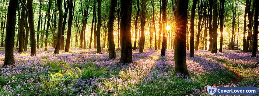 Cute Relationship Quotes Hd Wallpaper Spring Forest Sunset Seasonal Facebook Cover