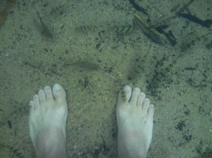 Fish nibbling Matt's toes