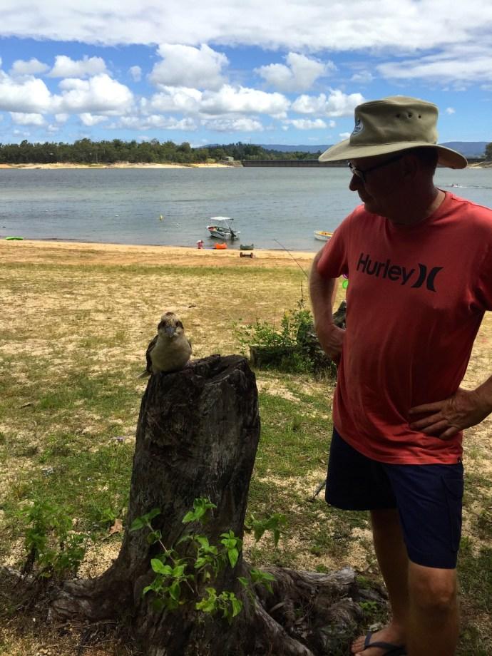 Cheeky Kookaburra