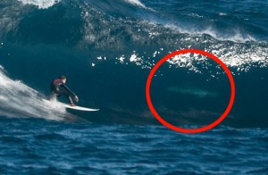 Surfer Fergal Smith catches a \'tube\' completely unaware he is sharing the wave with a Great White Shark