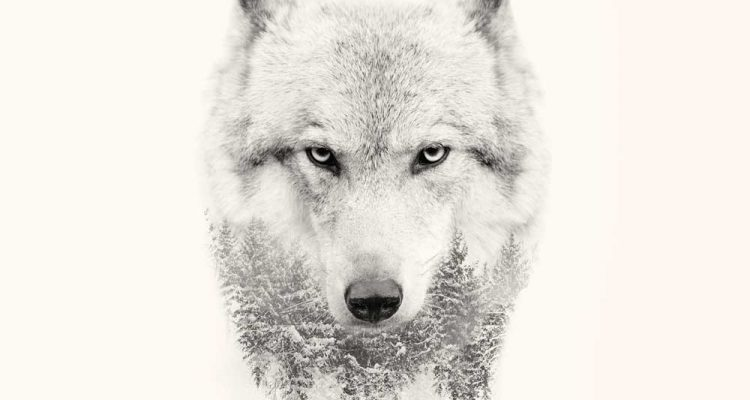 Dream Quotes Wallpaper 20 Strong Wolf Quotes To Pump You Up Wolves Amp Wolfpack