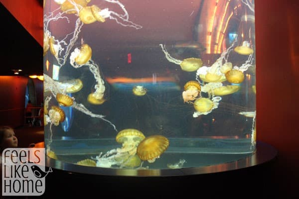 Adventure Aquarium review  - jellyfish