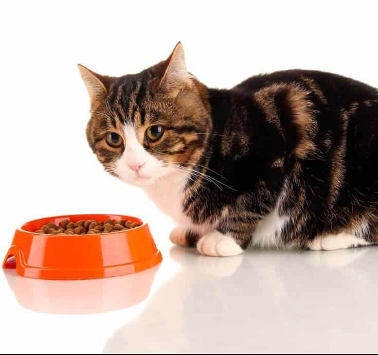 10 Best Cat Foods In 2018 - Guide  Reviews Of Top Dry  Wet Products