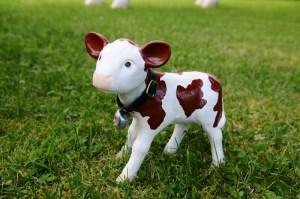 Petit veau avec clochette