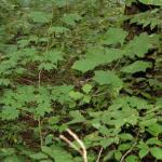 Indigenous Flora