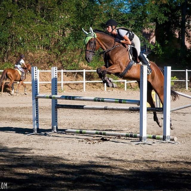wwwfiammettamerlocom link in bio horses horse horsesofinstagram TagsForLikes horseshow horseshoehellip
