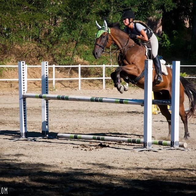 fiammettamerlocom link in bio horses horse horsesofinstagram TagsForLikes horseshowhellip