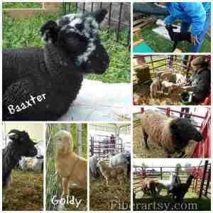 2014 Kentucky Sheep & Fiber Fest was a huge success!
