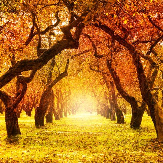 Desktop Wallpaper Pinterest Fall Le Pi 249 Belle Filastrocche Su Autunno Filastrocche It