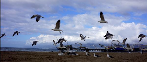DSC00273_seagulls w pier in bg_600@72