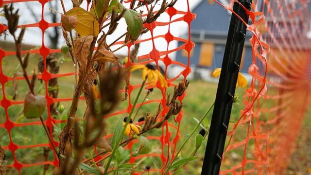 DSC03252_Sunflower fence