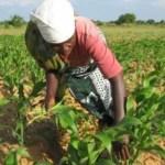 La Banque Mondiale accorde 100 millions de dollars à la RDC