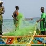 Mauritanie-pêche: le chiffre d'affaires de la SMCPP en hausse