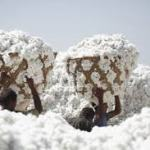 Benin: ouverture de la campagne cotonnière