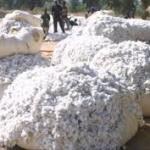 Guinée: démarrage de la campagne de commercialisation du coton