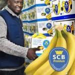 La Compagnie fruitière va produire de la banane «bio» en Côte d'Ivoire