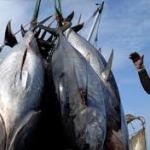 Guinée Bissau: Fujian Shai Corp investit plus de 300 millions de dollars dans la pêche et l'hôtellerie
