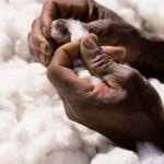 Togo : Baisse de la production cotonnière