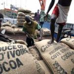Côte d'Ivoire : le prix d'achat du cacao passe à 1 100 francs CFA le kilo