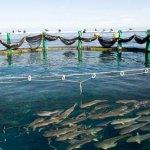 Cameroun : Le FIDA s'engage pour la promotion des entreprises aquacoles