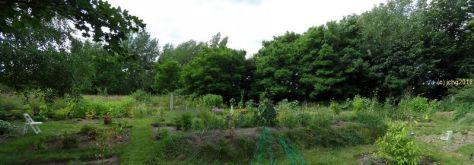 Der Garten noch eine Perspektive am 01.07.2016