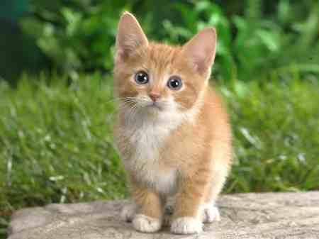 Girl Kitten Names That Start With T