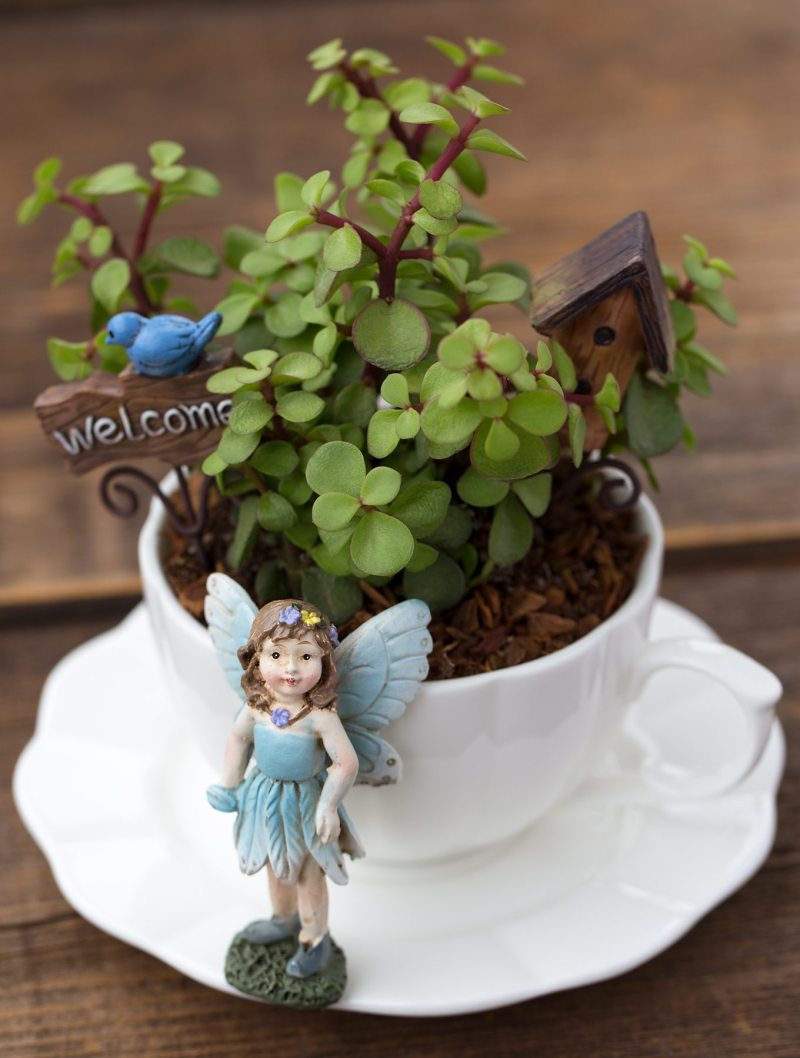 Large Of Fairy Garden Instructions