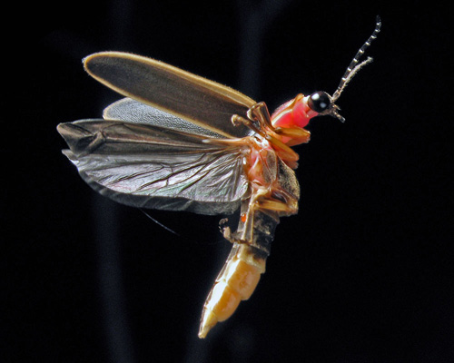 Firefly Body Diagram Wiring Diagram