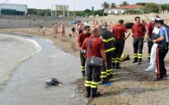 Resti di cadavere sulla spiaggia a Livorno, esami in corso