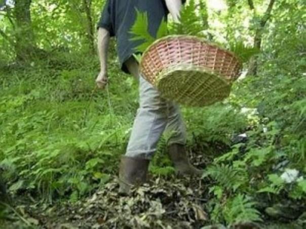 Cercatori di funghi piombinesi ritrovati dopo ore di ricerche