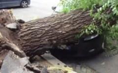 Maltempo: cade albero, donna su scooter muore per evitarlo