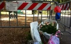 Firenze, l'albero killer delle Cascine è sano ma il ramo di 7 quintali era incrinato