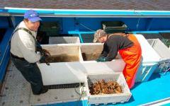 Toscana, fermo pesca: uomini del mare sul piede di guerra. Il Governo: «Risarcimenti in arrivo»