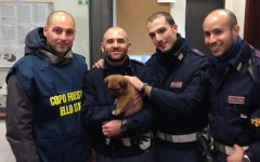 Firenze, ha un nuovo padrone il cucciolo «Binario» preso a calci alla stazione