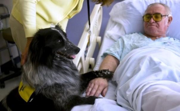 Pet therapy, si farà non più solo con i cani