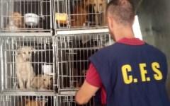Firenze: 50 cani sequestrati dal Corpo forestale dello Stato. Viaggiavano in pessime condizioni (VIDEO)