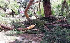 Toscana, allerta per il forte vento: tetti scoperchiati e alberi caduti. Super lavoro per i vigili del fuoco