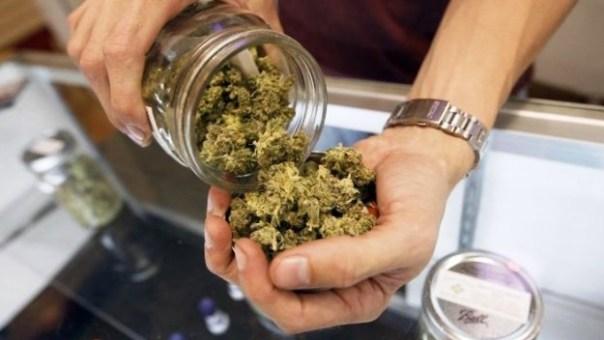 Cannabis terapeutica, a Firenze ne fanno uso sempre più pazienti
