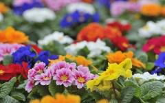 Piante e fiori in Italia: un mercato da 2,4 miliardi di euro. Per 30 mila aziende e 100 mila posti di lavoro