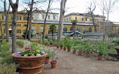 Firenze: «Il Giardino dei semplici» sempre verde, con i suoi 470 anni