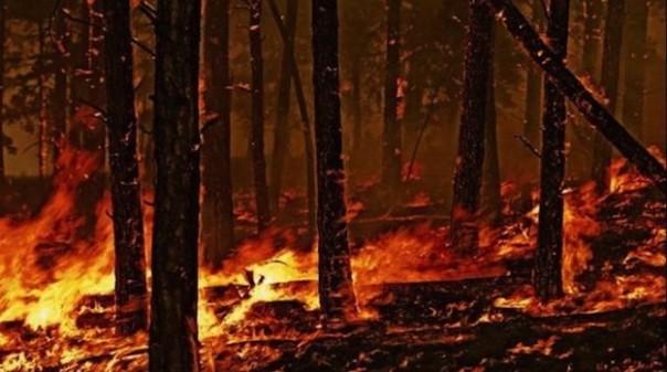 incendio-boschivo-2-604x337