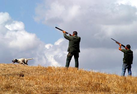 caccia cacciatore cacciatori