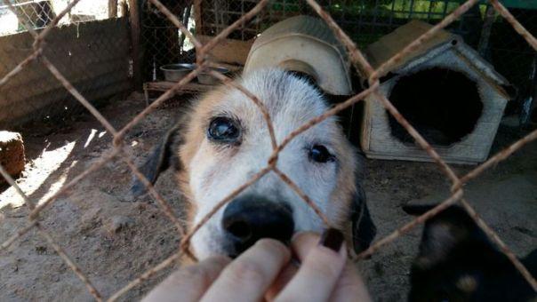 Cani canile abusivo maltrattamento animali