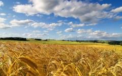 Autostrada A1: funerale del grano con trattori al casello Valdichiana. Corteo martedì 25 ottobre