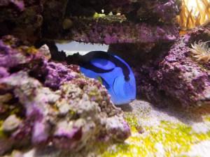 Saltwater Aquarium Setups, Fishtank, reef tank